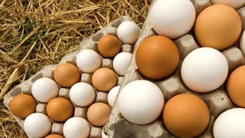 باورهای نادرست درباره تخم مرغ   بهترین متخصص تغذیه و رژیم درمانی اصفهان